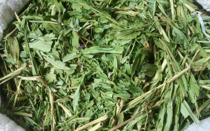 Иван-чай - Сибирский травник, Барнаул (Россия) - купить, цена
