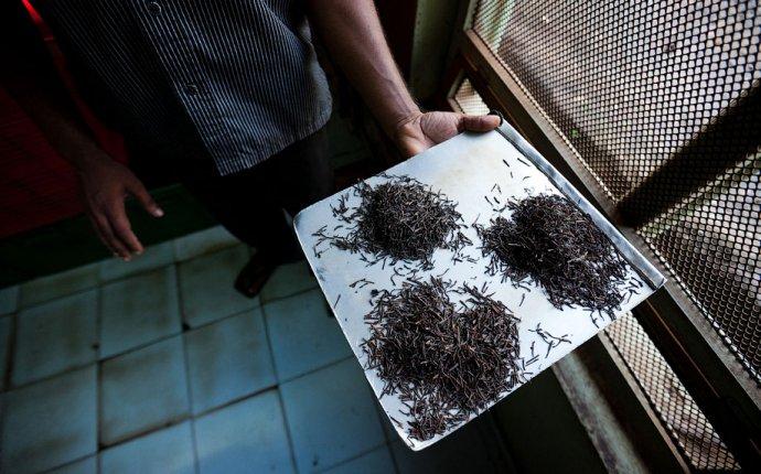 Как делают чай, Шри-Ланка – Варламов.ру
