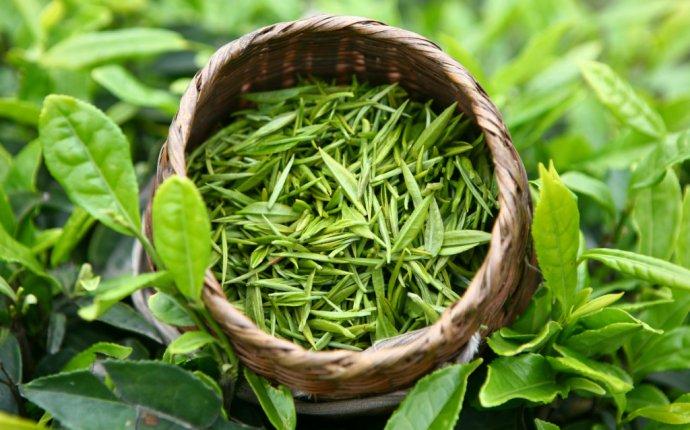 Как использовать зеленый чай в уходе за лицом | Visio