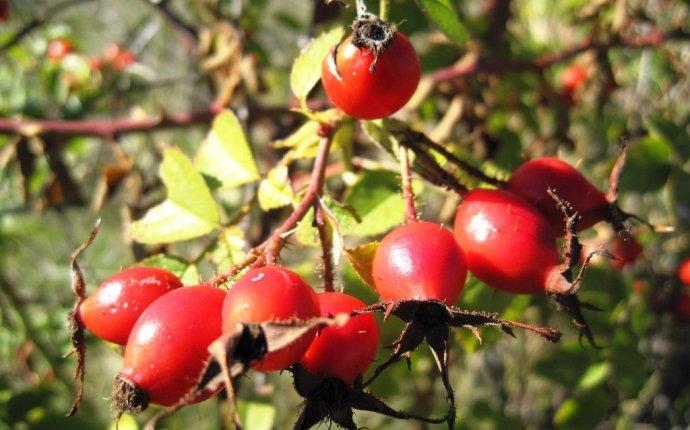 Полезные травы для чая в походе | Travik.RU